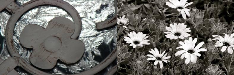 echogram-flowers