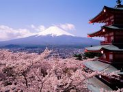 Fuji-Japan-Cherry-Blossoms-and-Mount-1-2TELRXMJHD-1600x1200
